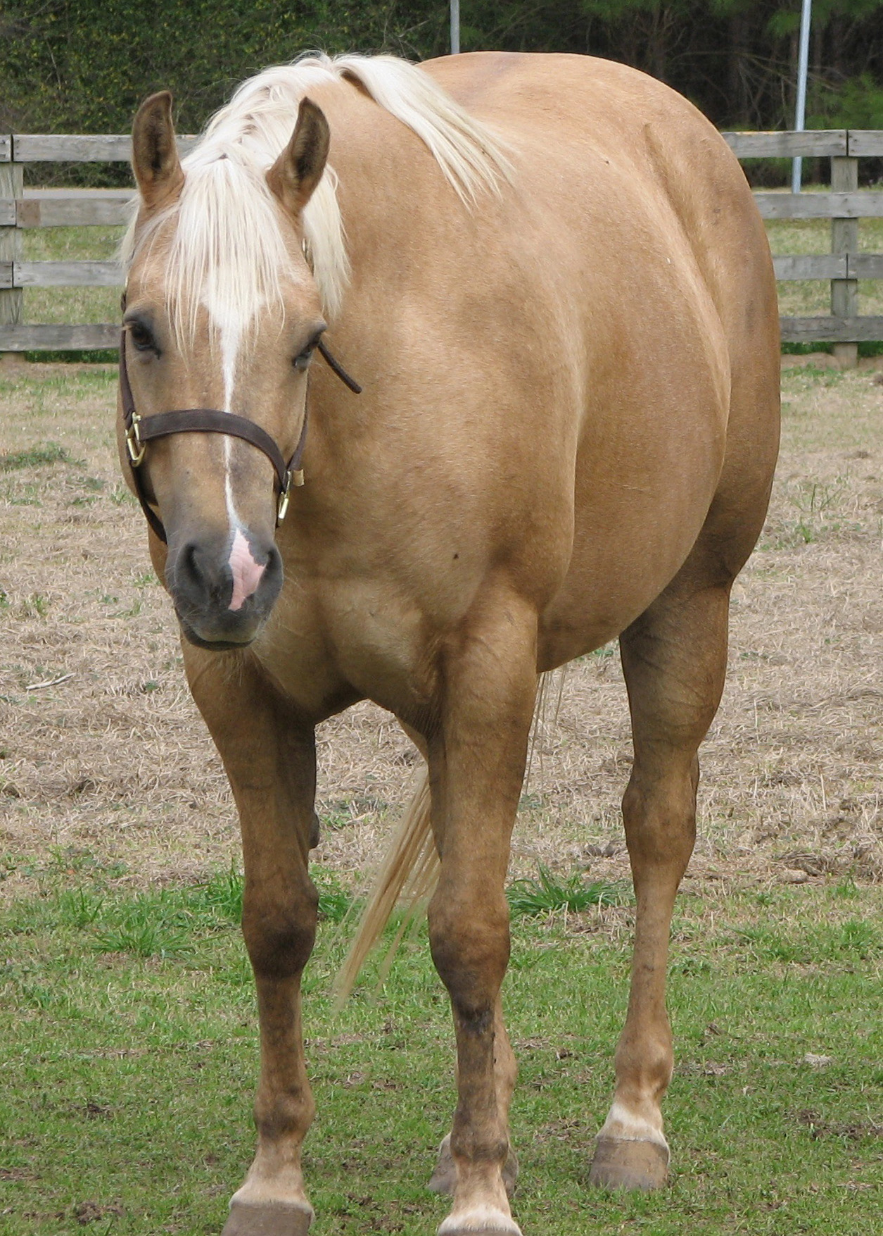All Around Horses, Cow Horses, Cutting Horses for Sale